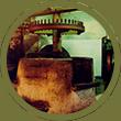 Fase di produzione olio extra vergine